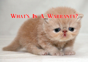 what's in a warranty